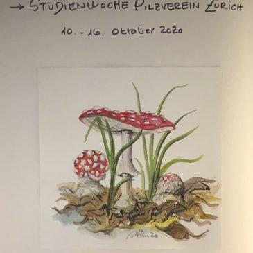 Pilzstudienwoche in Wislikofen AG